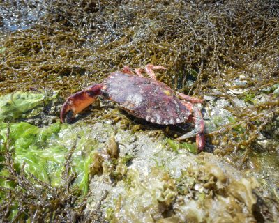 Thetis Island Beach Walk-17